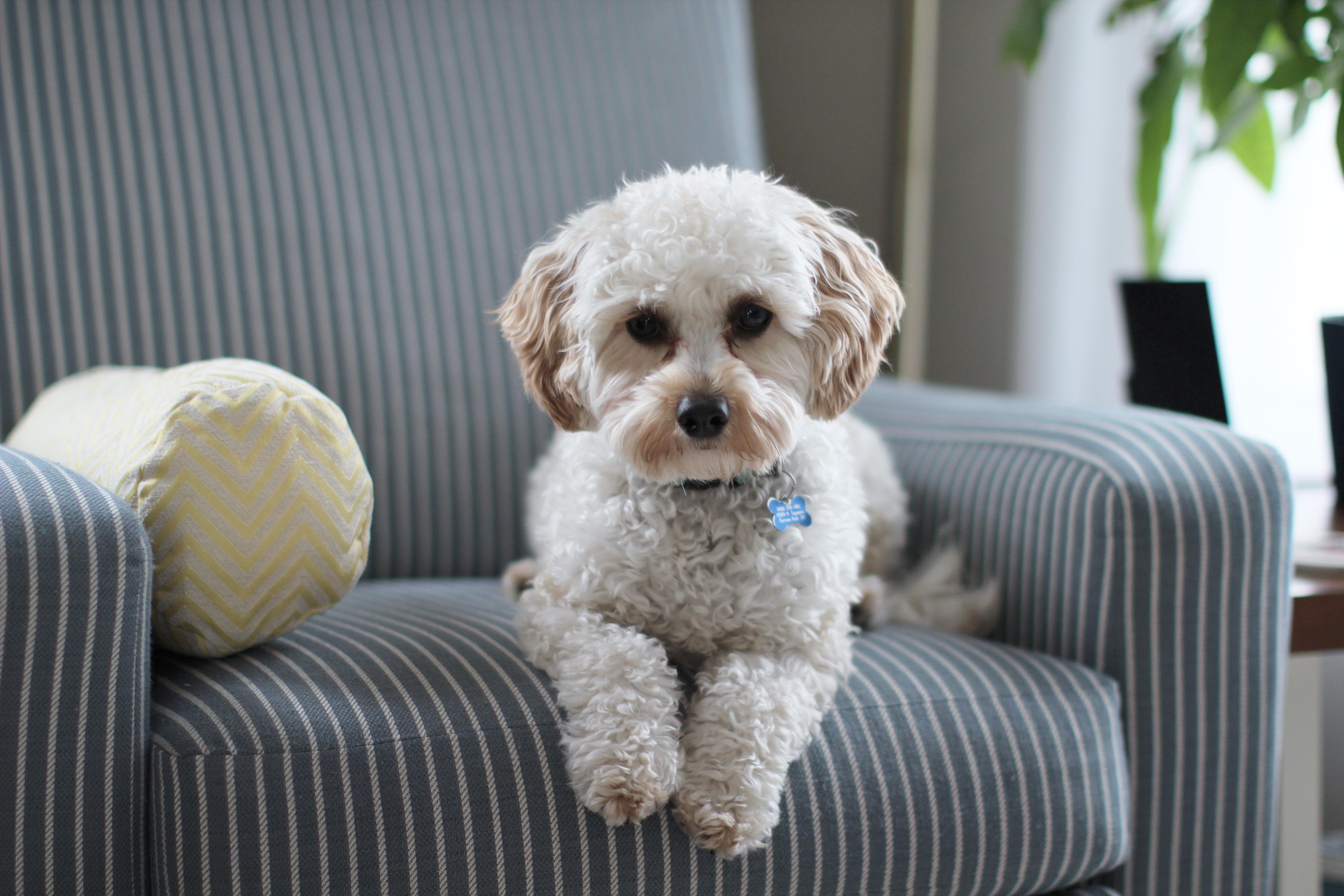 A casa é do pet! Confira dicas de organização pra quem tem cachorro